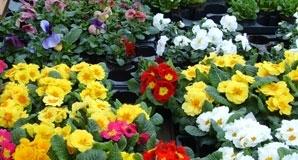 Des plantes d'intérieur et d'extérieur